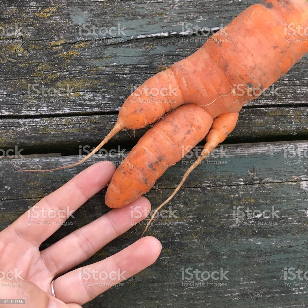 Carrot mutation - looks like fingers stock photo
