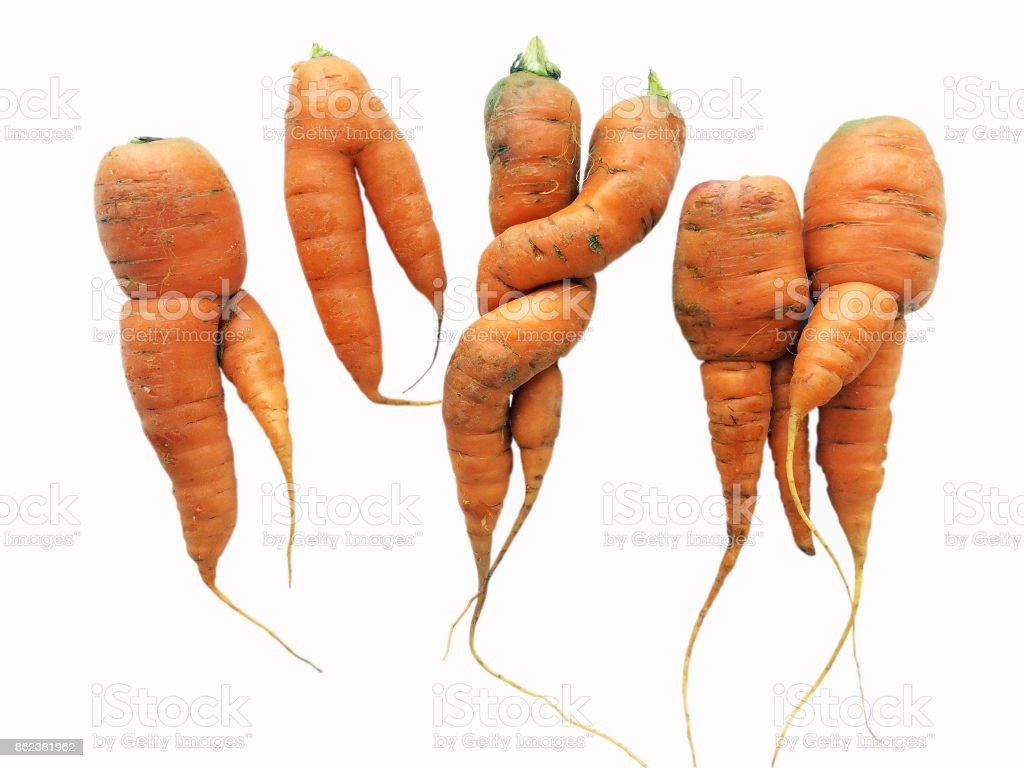 Carrot party stock photo