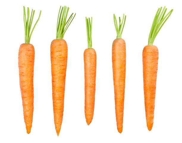 wortel - wortel plantdeel stockfoto's en -beelden