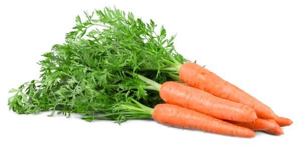 Carrot. stock photo