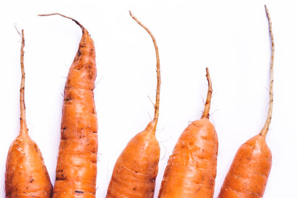 Carrot roots stock photo