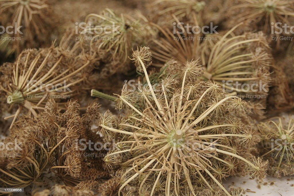 Carrot  Seeds royalty-free stock photo