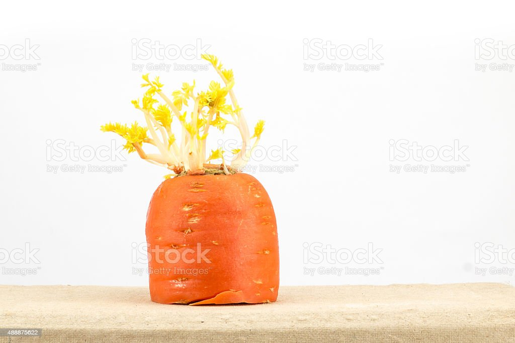 Carrot Sprouts stock photo