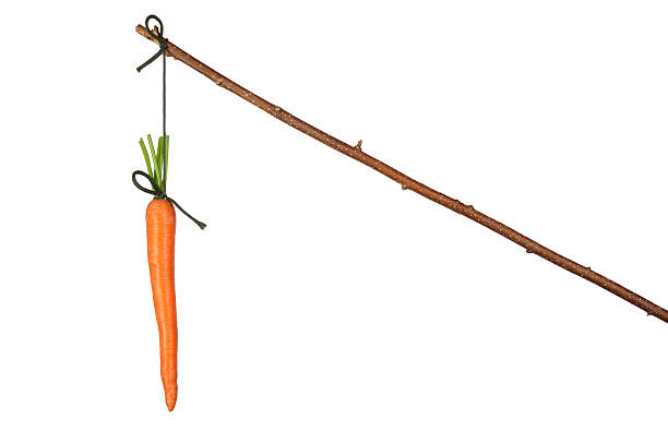 Carrot tied to a brown stick with string stock photo