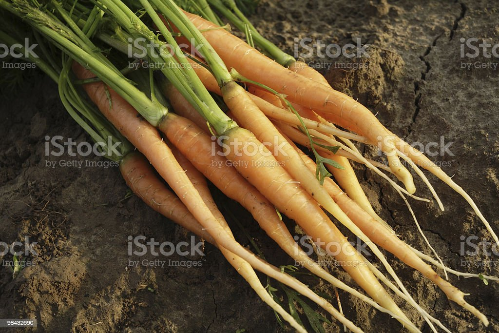 carrots 1 royalty-free stock photo