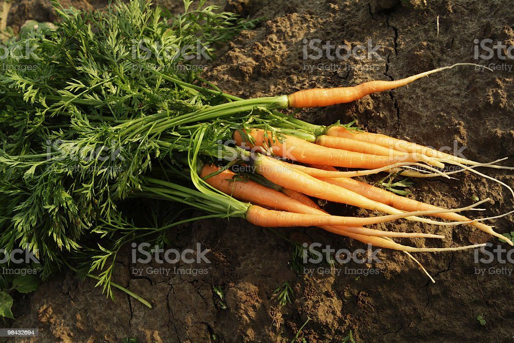 carrots 3 royalty-free stock photo