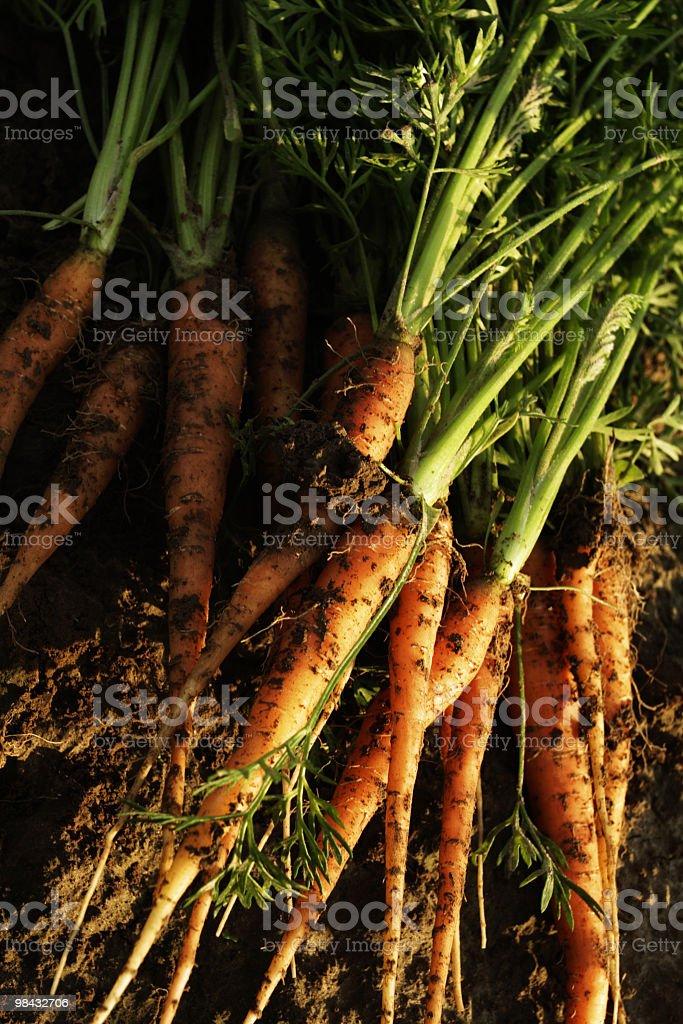 carrots 5 royalty-free stock photo
