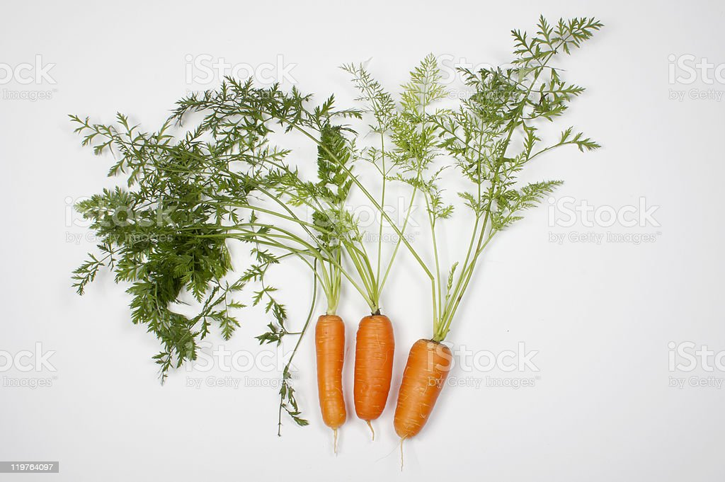 Carrots and carrot tops isolated on white stock photo