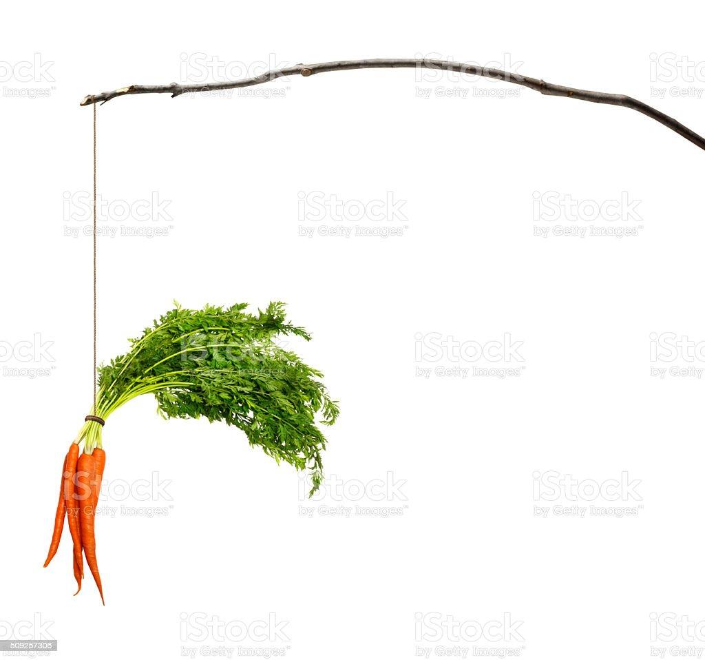 Karotten Baumelnd von einem Stock – Foto