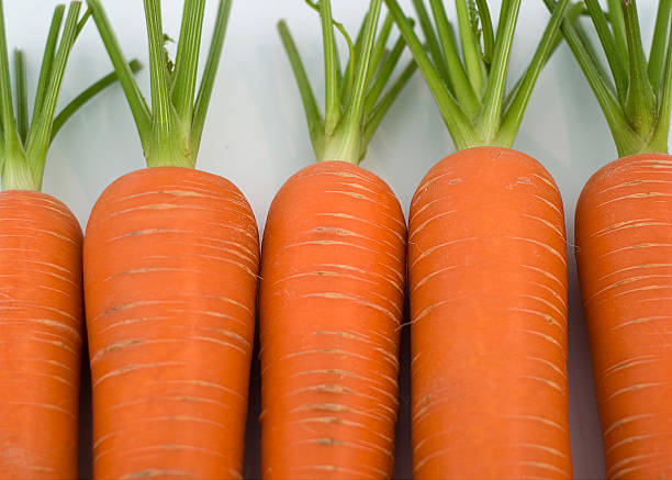 Carrots in a row stock photo