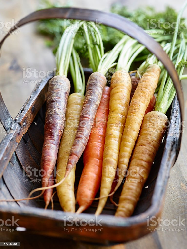 Carrots in a trug basket stock photo