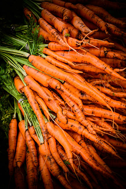 Carrots in the Raw stock photo