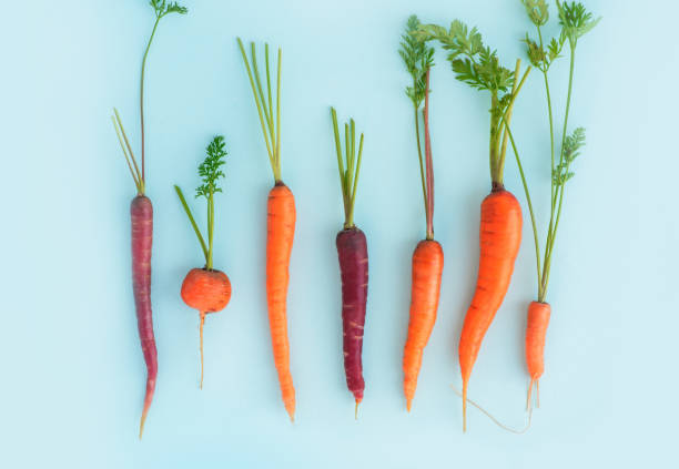 Carrots of different shapes, colors and sizes on a blue background Carrots of different shapes, colors and sizes on a blue background, top view. Diversity concept carrot stock pictures, royalty-free photos & images
