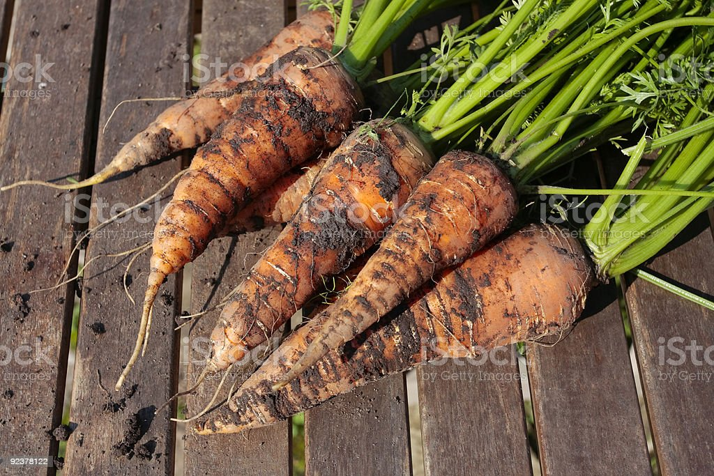 Carrots on garden table royalty-free stock photo