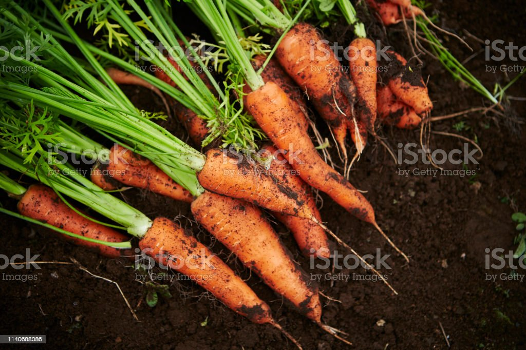 Carrots with dirt