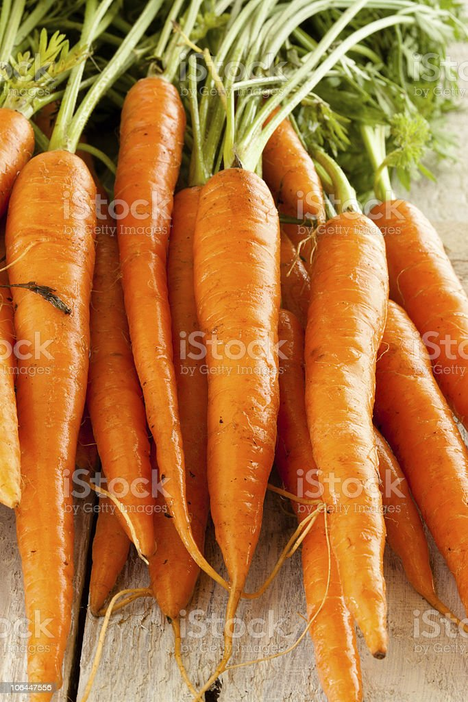 Carrots straight from the ground royalty-free stock photo