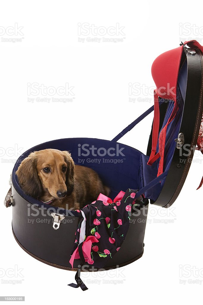 Carry Case Pup royalty-free stock photo