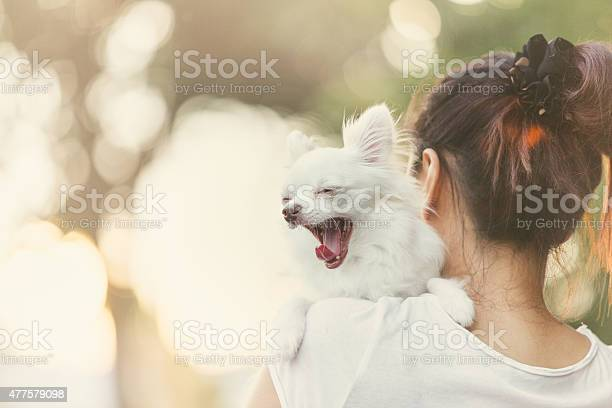 Carry dog picture id477579098?b=1&k=6&m=477579098&s=612x612&h=mjiydrbx1 yiaoihcaeo3hte9qubvqxo0sl2gb6hgvg=