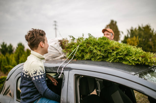 Carrying christmass tree to the home stock photo
