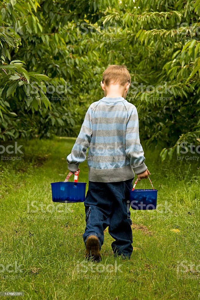 Carrying two backets of cherries royalty-free stock photo