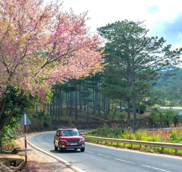 Autos fahren auf der Landstraße mit Kirschblütenvordergrund – Foto