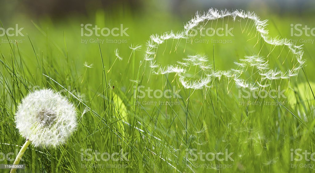 Car-shaped dandelion seeds floating away stock photo