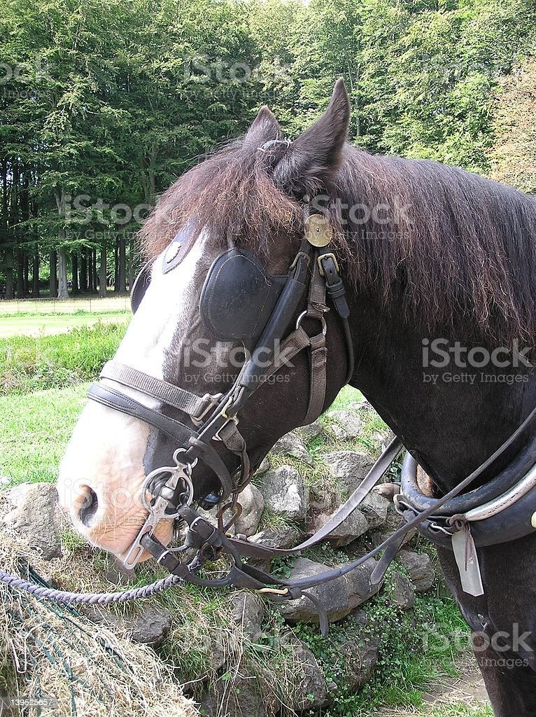 Cart Horse Profile royalty-free stock photo