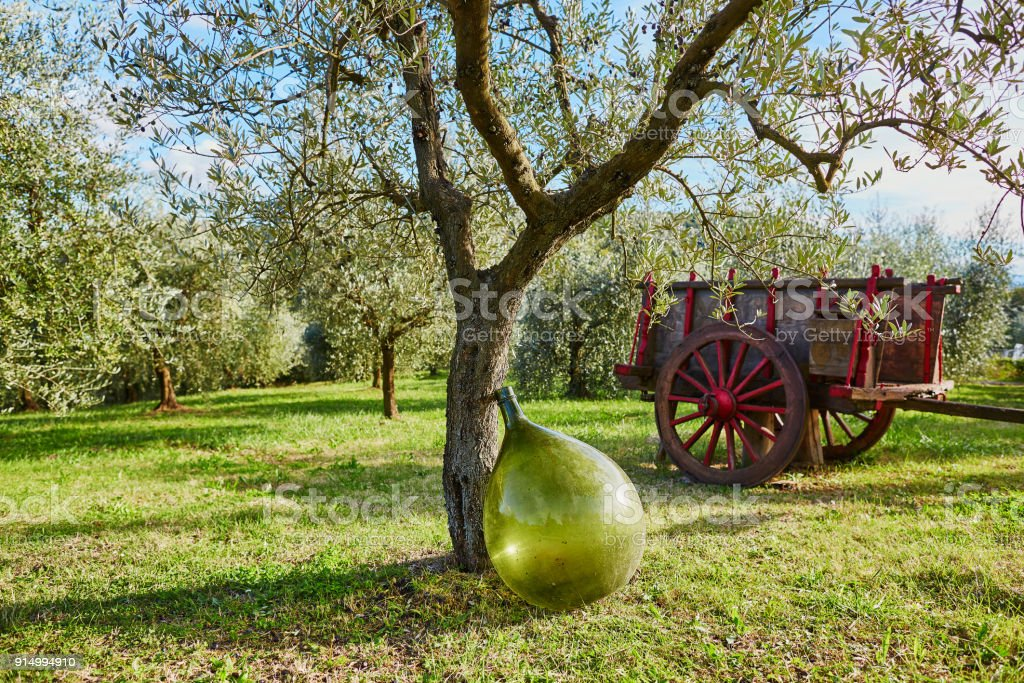 Cart under the olive tree on a farm stock photo