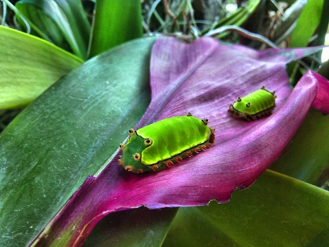 Carterpillar,Oruga,Caterpillar,Chenille,Bruco