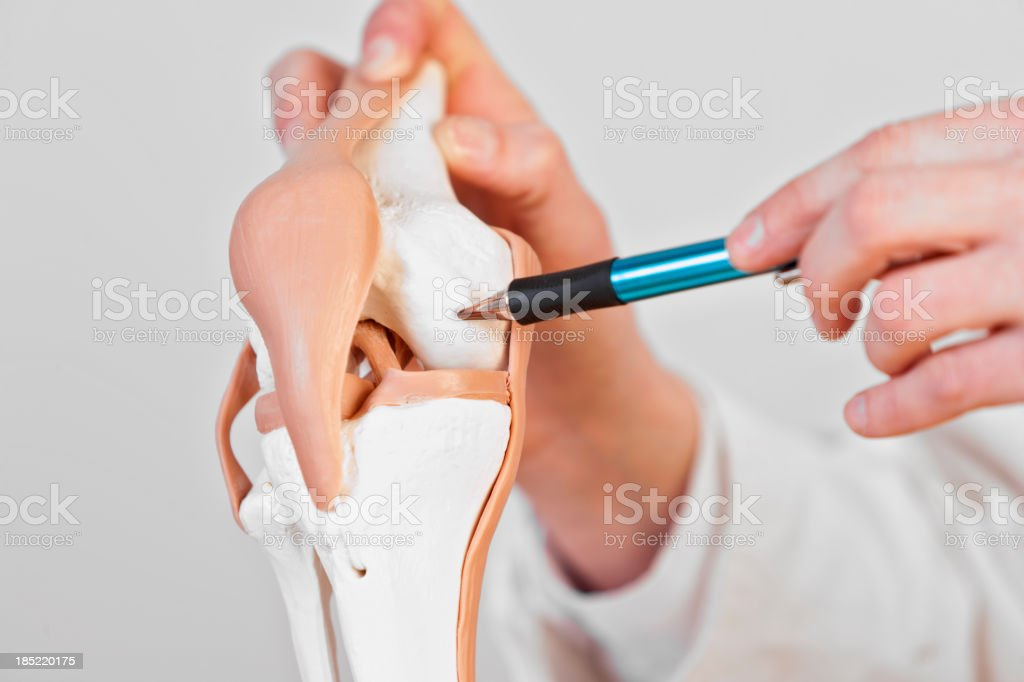Cartilage stock photo