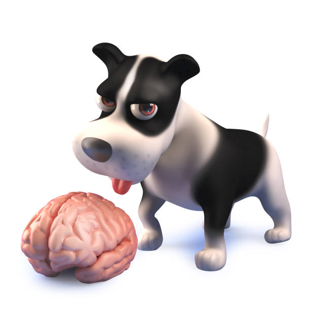 Cartoon black and white puppy dog in 3d looking at a human brain picture id1161188264?b=1&k=6&m=1161188264&s=612x612&w=0&h=t gtgkaebaktuvviuejelr7j1jorizxzyi71omhomxo=