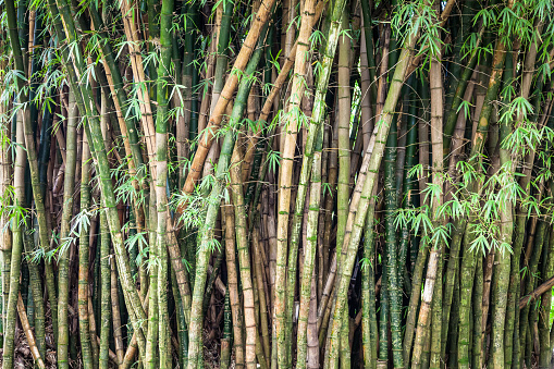 Carved Green Bamboo Forest