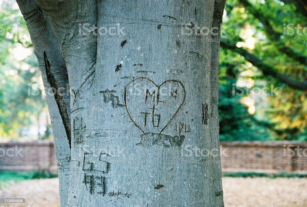 Carved Tree royalty-free stock photo