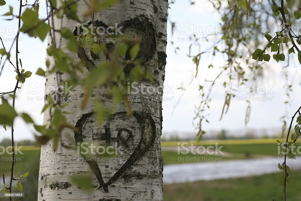 Carving in the bark of a birch stock photo