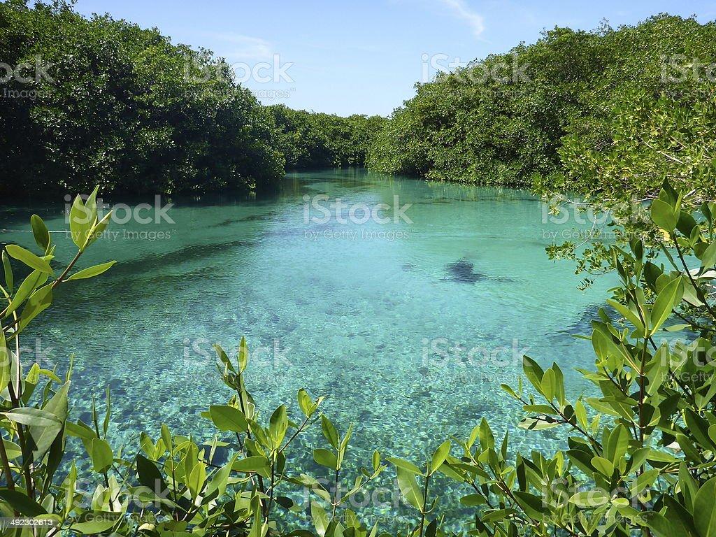Casa Cenote in Mayan Riviera, Mexico. stock photo