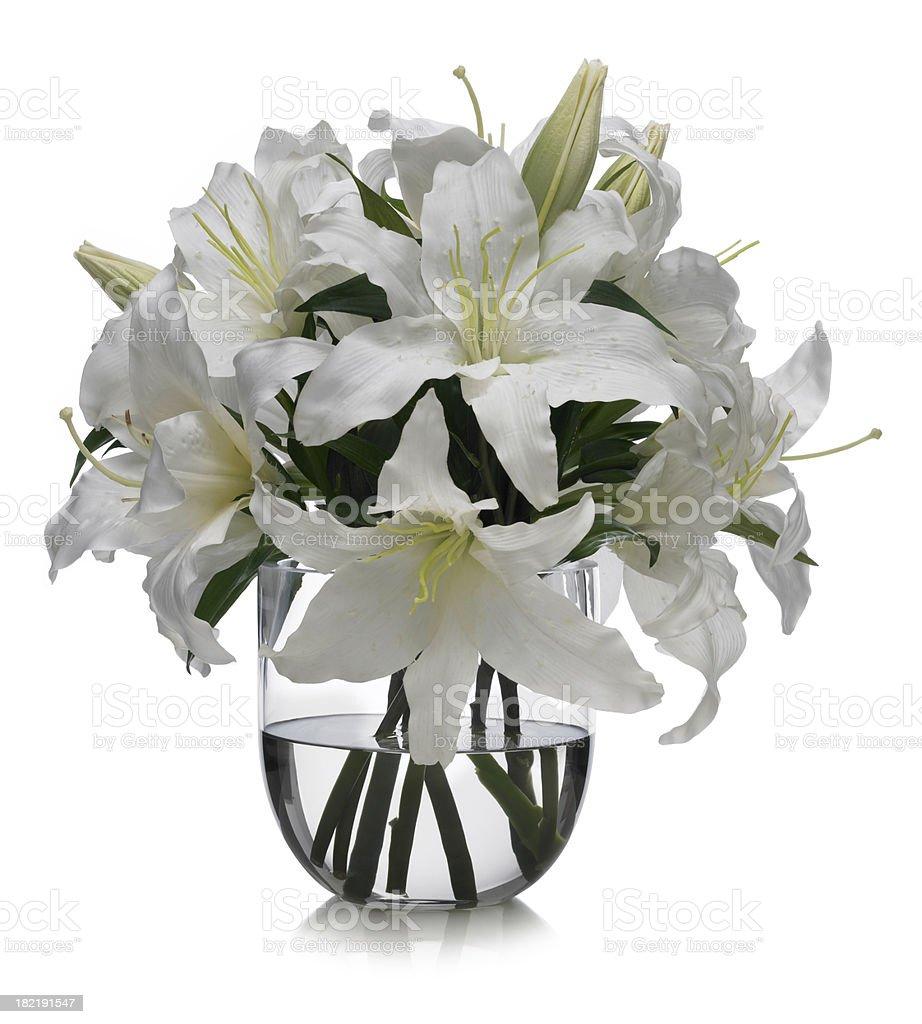 Casablanca Lilies on white background stock photo