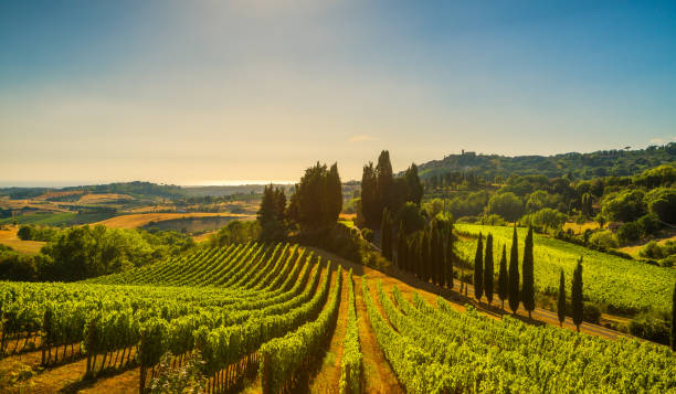 Casale Marittimo village, vineyards and landscape in Maremma. Tuscany, Italy. Casale Marittimo village, vineyards and countryside landscape in Maremma. Pisa Tuscany, Italy Europe. mediterranean sea stock pictures, royalty-free photos & images