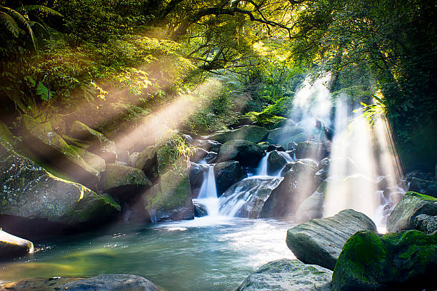Cascade falls over mossy rocks stock photo