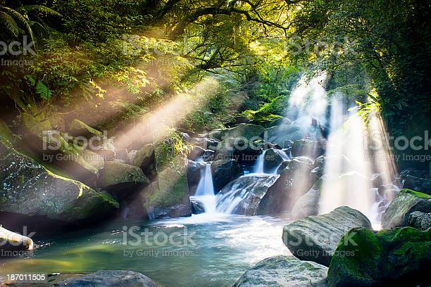 Photo of Cascade falls over mossy rocks