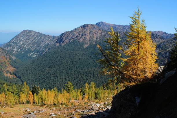 cascade larch - leavenworth washington stock photos and pictures