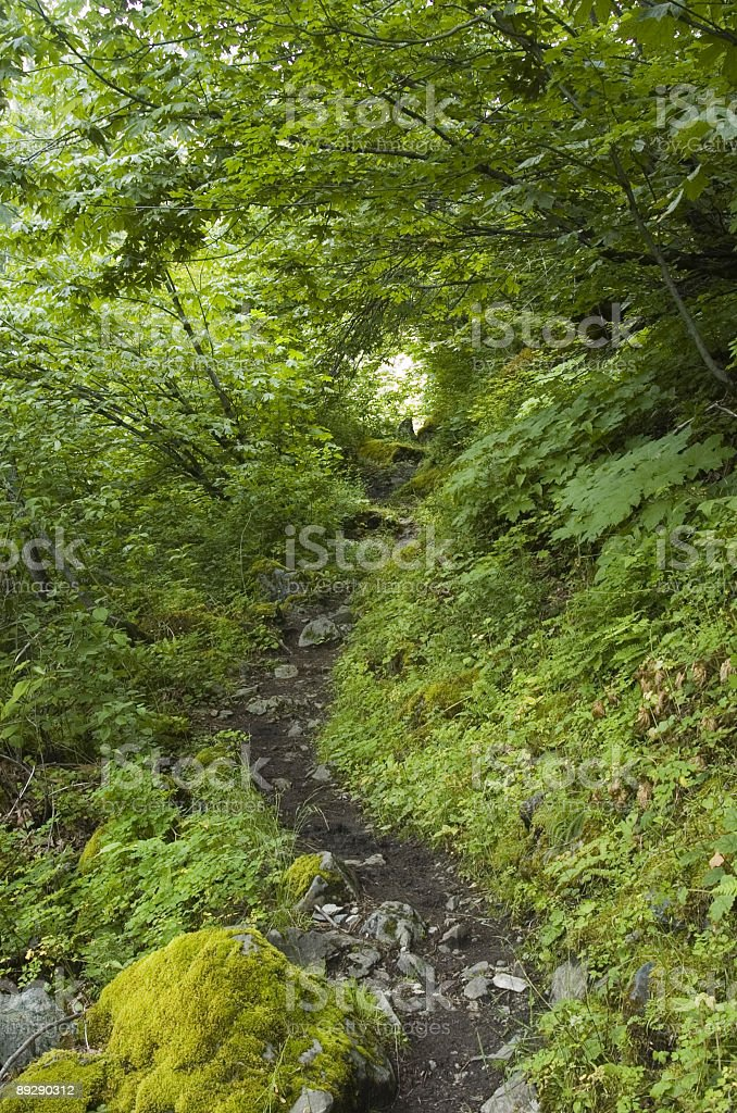 Cascade Mountain Trail 2 royalty-free stock photo