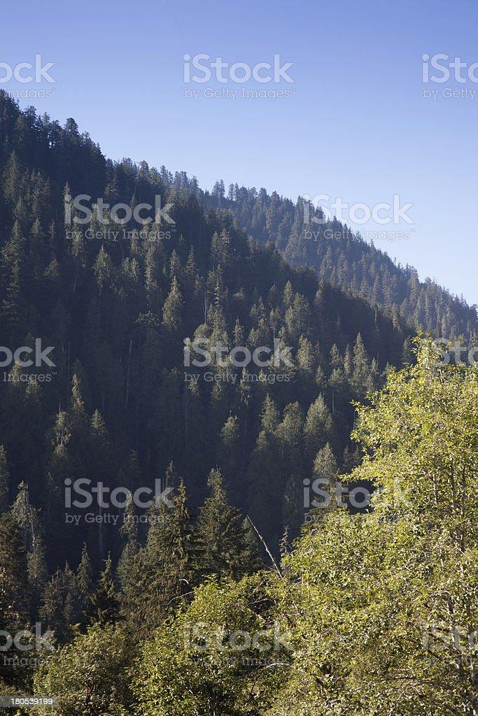 Cascade Mountains Evergreen Trees Cascade Mountains Evergreen Trees against Blue Sky Blue Stock Photo