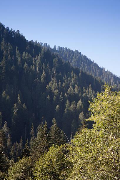Cascade Mountains Evergreen Trees stock photo