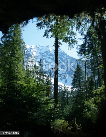 Cascade Mountains view from the woods