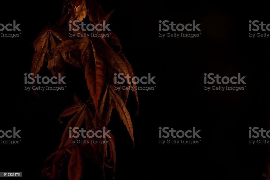 Cascade of Dark Leaves stock photo
