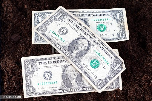 cash American dollars banknotes on the black fertile soil of an agricultural field, close-up