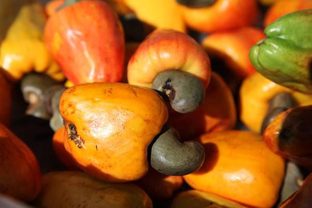 Cashew Obst, frischen harvest – Foto