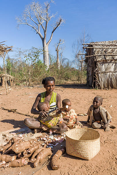 Cassava preparation foto