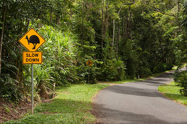 Cassowary, slow down, sign and road stock photo