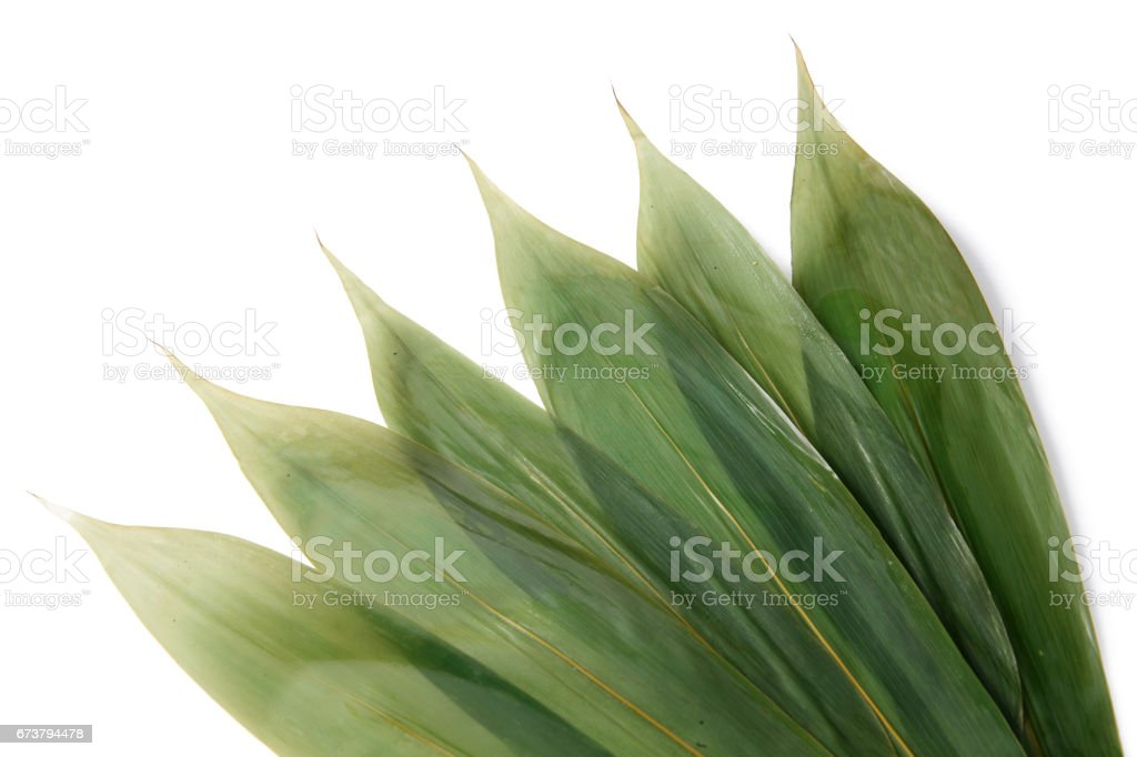 Cast leaves royalty-free stock photo